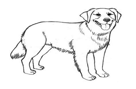 how to clip a golden retriever golden retriever puppy clip 51