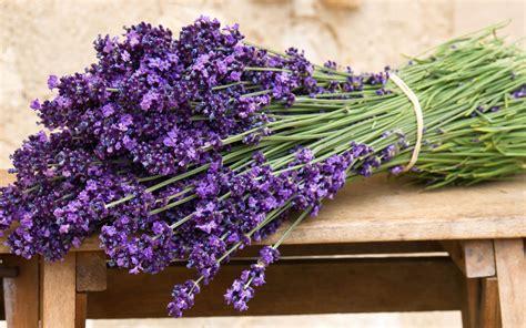 wallpaper flower lavender lavender flowers wide wallpaper wallpaper high