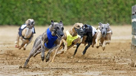 how fast do dogs run how fast do greyhounds run reference