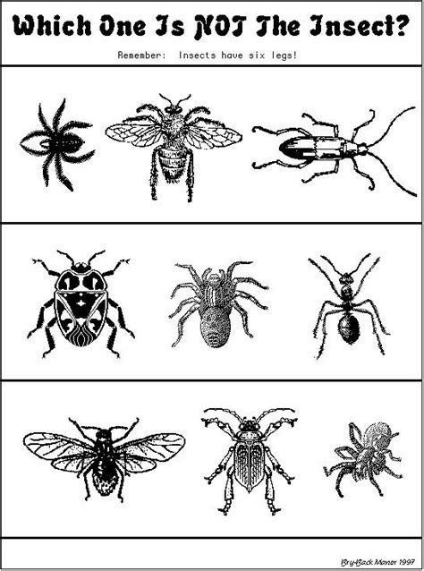 kids bug and insects worksheets quot which one is not an insect quot worksheet special ed