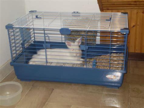gabbia coniglio nano prezzo comportamento coniglio nano pagina 2