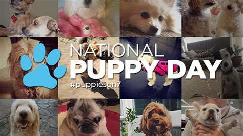 puppy day abc7 to hold adoption event with pet partners for national puppy day 2017