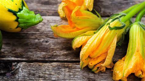 il fiore di zucca roma notizie di minturno il faro