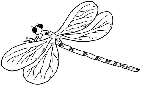 dragonfly 122 animals printable coloring pages
