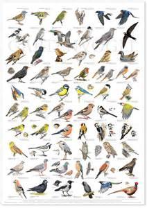 vögel in unserem garten 220 ber 1 000 ideen zu v 246 gel bestimmen auf baum