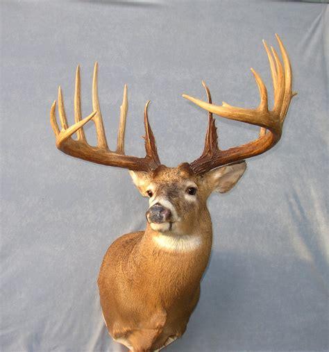 World Record Deer Rack by World Record Deer Antlers