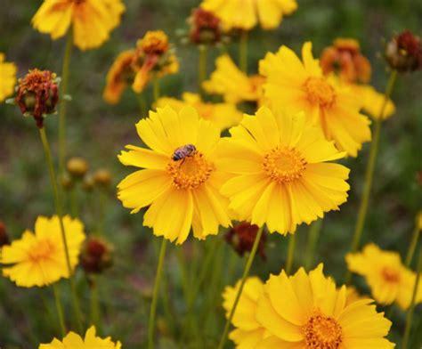 giardino biologico corsi giardinaggio giardino biologico giardinaggio