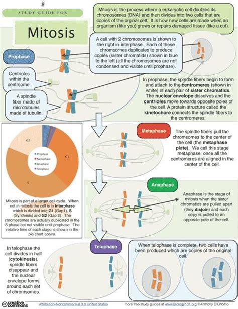 edmodo biology mitosis study guide creative homework and everything
