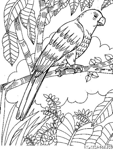 Coloriage Coloriage Perroquet Gratuit Animaux Coloriage A Dessiner De Perroquet Gris Du Gabon L
