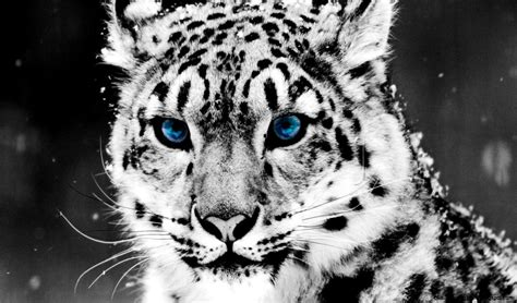 Awesome Animal awesome animal desktop backgrounds wallpapers gallery