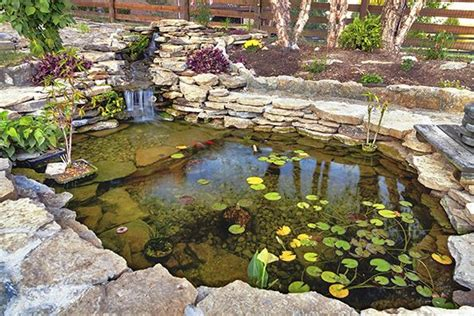 backyard pond kits in with the old how to disrupt a dying industry open forum