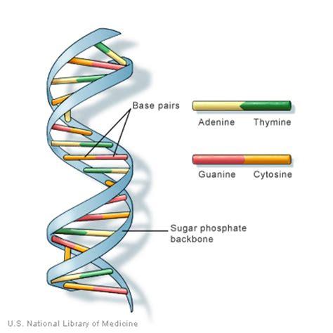 What Causes Color Blindness Genetically Boas Pr 225 Ticas Farmac 234 Uticas O Que 233 Dna