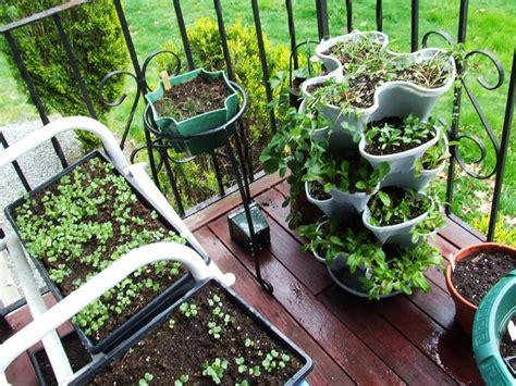 coltivazione a terrazza orto balcone orto in balcone coltivare orto sul balcone