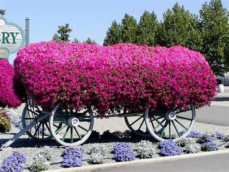 surfinie fiori petunie e surfinie differenza fiori delle piante