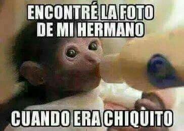 hermanos normales no le pegues a mi hermana mami yo esoo jajsjajaja im 225 genes de monos con frases para hacer bromas chistes