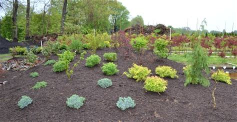 landscaping mound ideas image mag