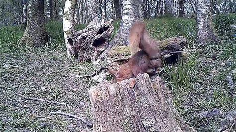 Kamera Trap Bushnell Trophy Hd Max 119576c bushnell trophy hd max 119477 wildlife squirrel