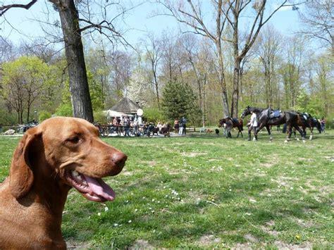 Englischer Garten München Mit Hund mit hund im englischen garten in m 252 nchen tierischer