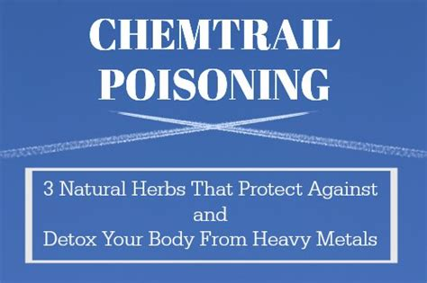 Best Methods To Detox From Fluoride Vaccines Chemtrails by Chemtrail Poisoning 3 Herbs That Protect Against