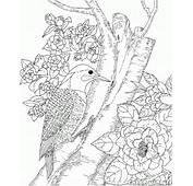Dibujo Para Colorear  Carpintero En El Bosque