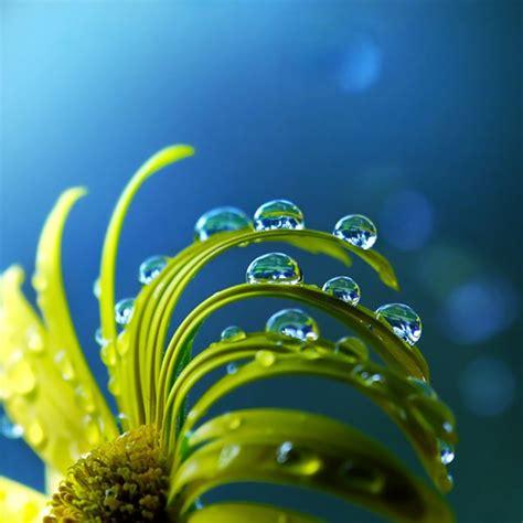 Stunning Water Photography by Amazing Macro Wiresmash