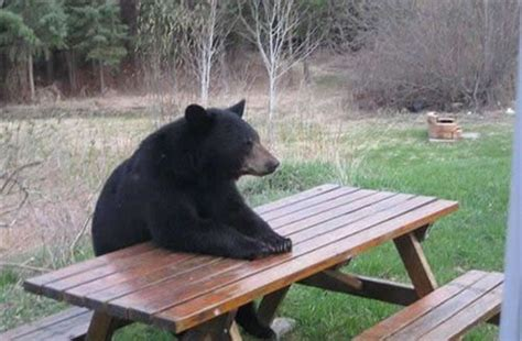 Bear At Picnic Table Meme - daybreaks for 11 08 12 waiting patiently daybreaks devotions