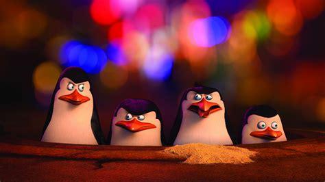 wallpaper penguins  madagascar penguin cartoon