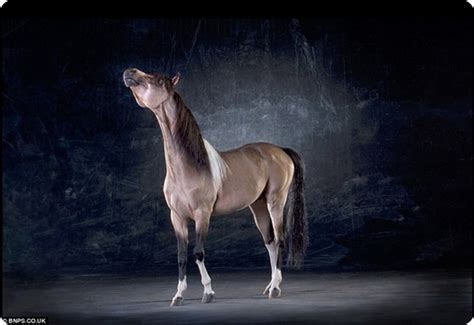 Рыжие кони картинки