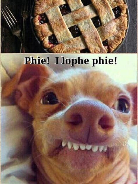 is tuna bad for dogs 25 best ideas about tuna on grumpy cat frozen memes and cat