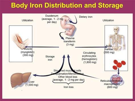 protein f deficiency symptoms iron deficiency anemia symptoms http www