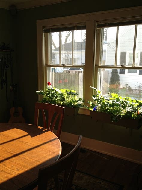 window box indoor 17 best images about window boxes indoors and out on