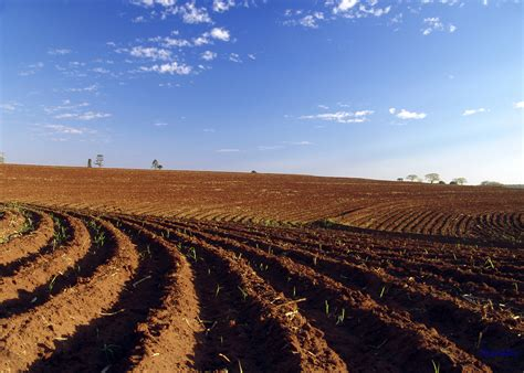 e terreni file terreno arado para planta 231 227 o refon 1 jpg wikimedia