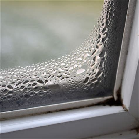 Symptoms Of Mold In House by Signs Of Mold What To Look For When Buying A House