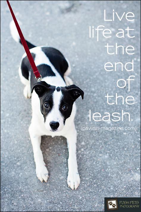 dog walking quotes quotesgram