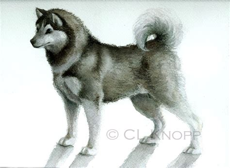 husky doodle puppies for sale pin husky doodle puppies on