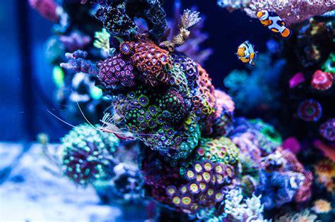 Shrimp Tank Aquascape Medred 2012 Featured Nano Reef Aquariums Nano Reef Com