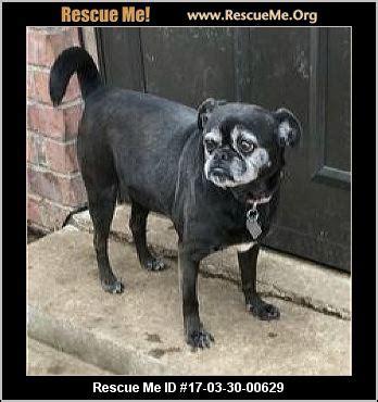 pug rescue owasso oklahoma rescue adoptions rescueme org