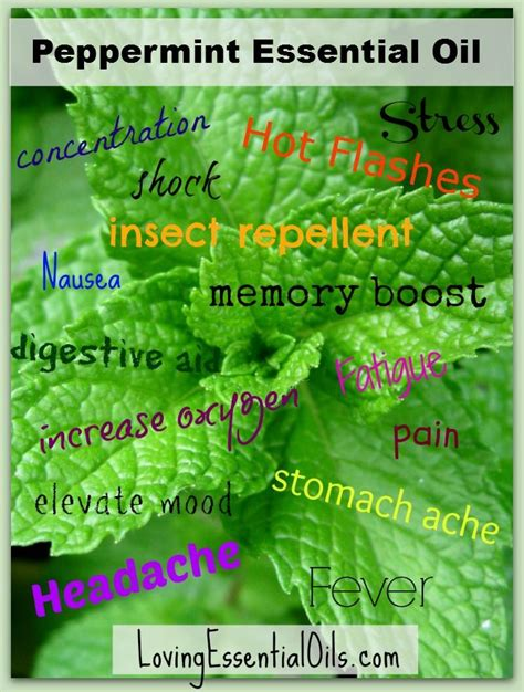 A Powerful Peppermint by 7 Powerful Peppermint Essential Uses Places
