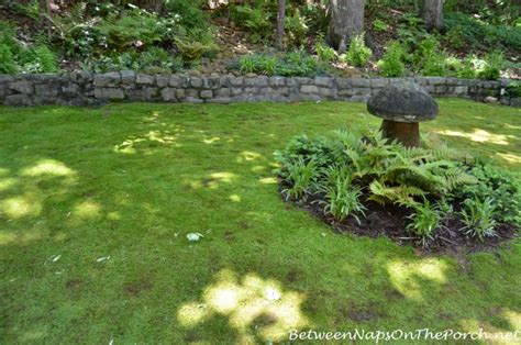 Moss Backyard by Storybook House With A Beautiful Garden