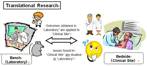 from bench to bedside from bench to bedside what does your research mean in the real world