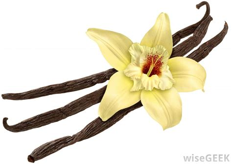 Vanilla Outher what is vanilla with pictures