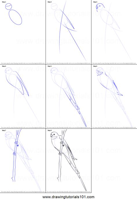 How To Draw A Princess Parrot Printable Step By Step How To Draw A Princess Printable