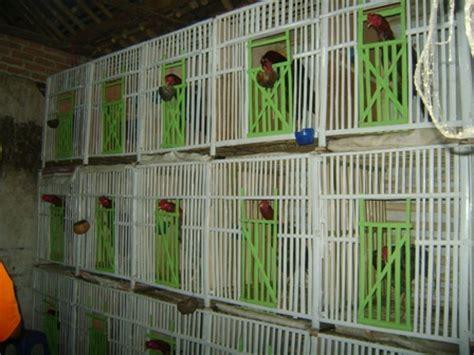 Kandang Set kandang ayam bangkok java toya richfarm explore