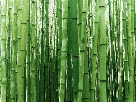 bamboo wallpapers art print poster
