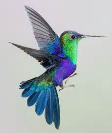 hummingbird colors 17 best ideas about hummingbirds on humming