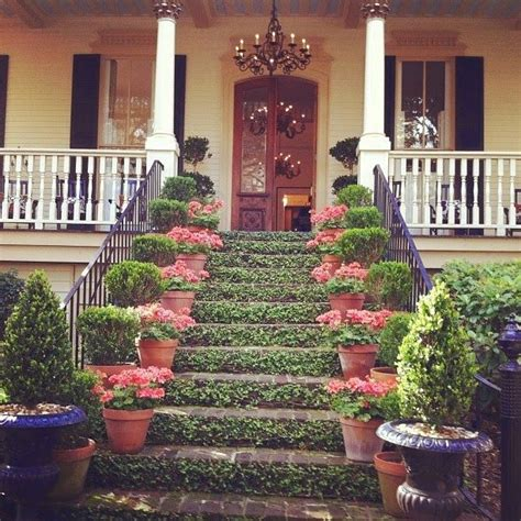 florence gardens magnolia hall at 17 best images about creeping fig vines on pinterest