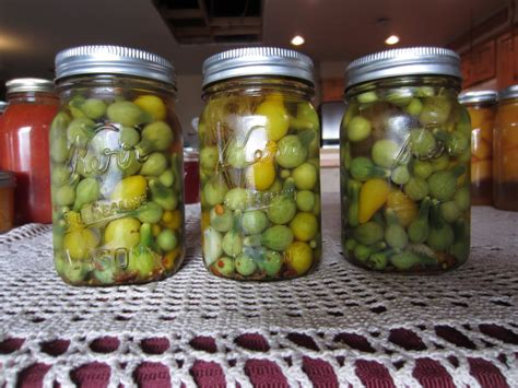 canning pickled green tomatoes