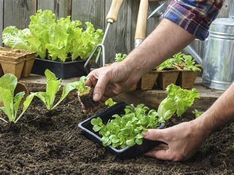 starting a vegetable garden dr weil