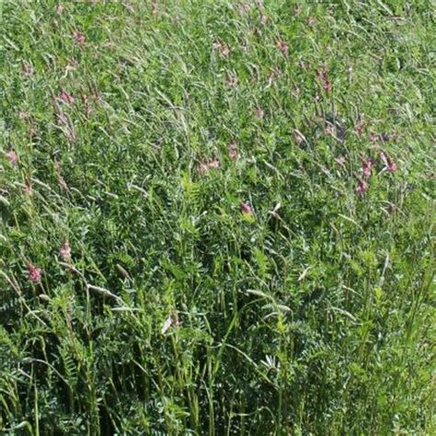prati da giardino giardino prati da foraggio bavicchi