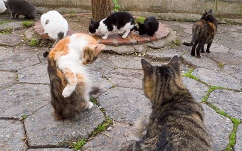 the feral irishman world s most secure house a zombie bunker warning to tourists in france after attack by feral cats